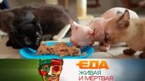 Выпуск от 26 мая 2018 года.Из чего делают корм для питомцев, какие продукты вызывают рак ичем полезна папайя.НТВ.Ru: новости, видео, программы телеканала НТВ