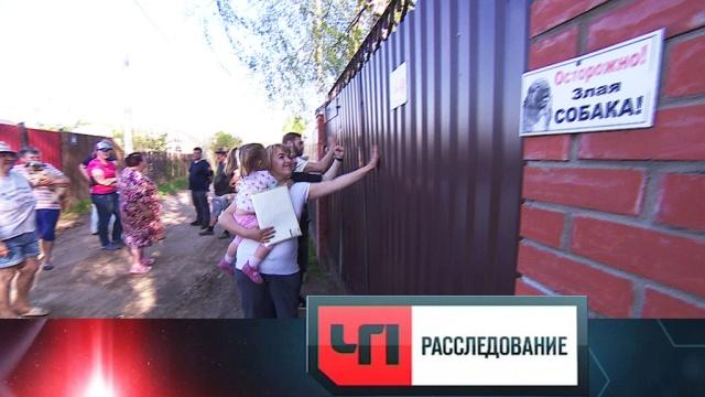 Как ипочему СНТ превращаются вОПГ? «ЧП. Расследование»— впятницу в18:15.НТВ.Ru: новости, видео, программы телеканала НТВ