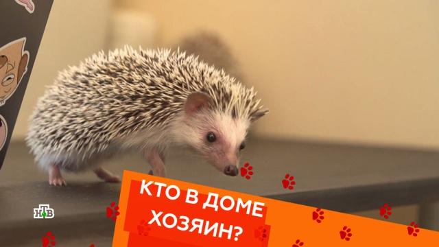 Кто в Доме хозяин?НТВ.Ru: новости, видео, программы телеканала НТВ