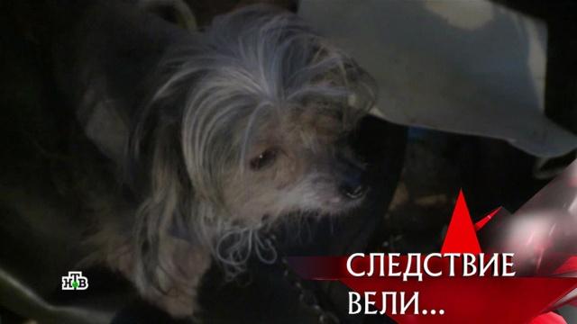 «Дело живодеров».«Дело живодеров».НТВ.Ru: новости, видео, программы телеканала НТВ