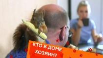 Выпуск двадцать пятый.Выпуск двадцать пятый.НТВ.Ru: новости, видео, программы телеканала НТВ