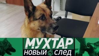 Этот пес внедряется вбанду, находит улики иловит преступников. «Мухтар. Новый след»— новые серии— спонедельника в08:20.сериалы, собаки.НТВ.Ru: новости, видео, программы телеканала НТВ