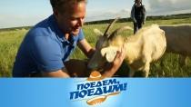 Выпуск от 29 сентября 2018 года.Ульяновск: сыр сместным акцентом, захватывающие полеты, сильнейшая бабушка планеты и блины с креветочным жюльеном.НТВ.Ru: новости, видео, программы телеканала НТВ
