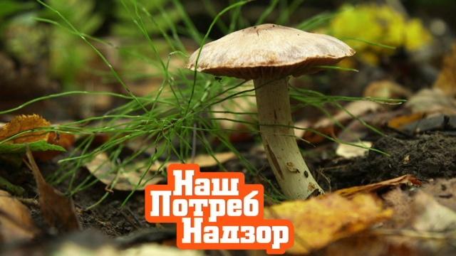 Чем опасны даже съедобные грибы икому противопоказан жгучий столовый хрен? «НашПотребНадзор»— ввоскресенье на НТВ.НТВ.Ru: новости, видео, программы телеканала НТВ