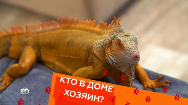 Террариум для игуан иобучение глухого пса командам.Террариум для игуан иобучение глухого пса командам.НТВ.Ru: новости, видео, программы телеканала НТВ