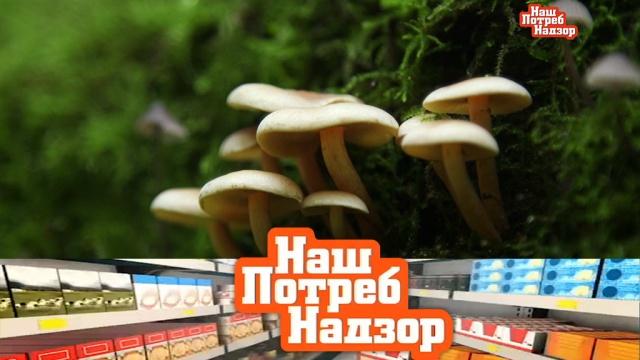 Как проверяют грибы, что такое витамин С, атакже— экспертиза столового хрена.грибы, еда, здоровье, медицина, продукты, технологии.НТВ.Ru: новости, видео, программы телеканала НТВ