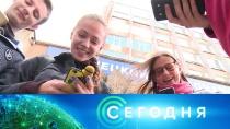 16 октября 2018 года. 13:00.16 октября 2018 года. 13:00.НТВ.Ru: новости, видео, программы телеканала НТВ