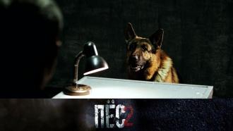 Четвероногий сыщик никогда не даст вобиду своего боевого товарища! «Пёс»— всубботу в21:00.сериалы.НТВ.Ru: новости, видео, программы телеканала НТВ