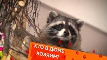 Выпуск тридцатый.Выпуск тридцатый.НТВ.Ru: новости, видео, программы телеканала НТВ