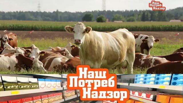Мифы о фермерских продуктах, проверка темного шоколада и ополаскивателей для белья.Мифы о фермерских продуктах, проверка темного шоколада и ополаскивателей для белья.НТВ.Ru: новости, видео, программы телеканала НТВ