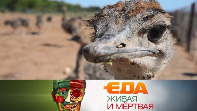 Выпуск от 27октября 2018года.Как устроены страусиные фермы, еда под охраной ЮНЕСКО и печенье, подрывающее здоровье.НТВ.Ru: новости, видео, программы телеканала НТВ