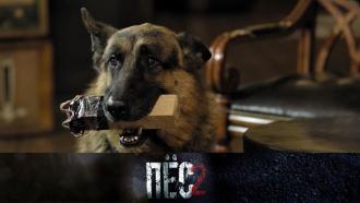 Успеютли отважный Пёс иего напарник найти иобезвредить неуловимого маньяка? «Пёс»— всубботу в20:40.сериалы.НТВ.Ru: новости, видео, программы телеканала НТВ