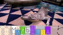 «Мальцева»: крокодил имаджонг вновогоднем интерьере, как правильно загадать желание ихранить постельное белье