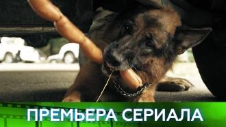 Новые дела знаменитого Пса иего бессменного напарника вдетективе «Пёс»— новый сезон— с28ноября на НТВ.НТВ.Ru: новости, видео, программы телеканала НТВ
