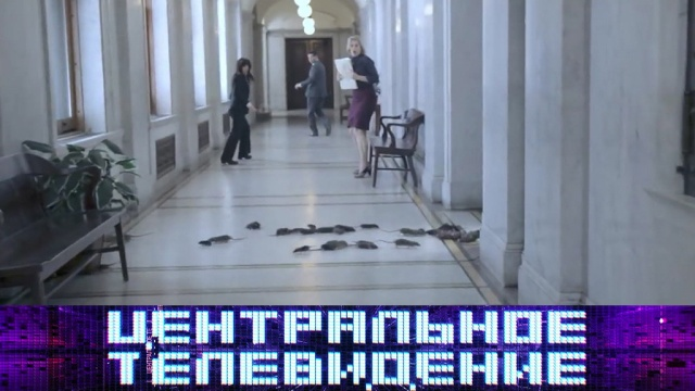 Выпуск от 24ноября 2018года.Выпуск от 24ноября 2018года.НТВ.Ru: новости, видео, программы телеканала НТВ