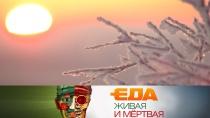 Выпуск от 1декабря 2018года.Специальный зимний выпуск.НТВ.Ru: новости, видео, программы телеканала НТВ