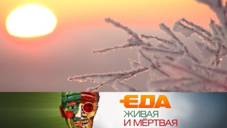 Специальный зимний выпуск.Специальный зимний выпуск.НТВ.Ru: новости, видео, программы телеканала НТВ