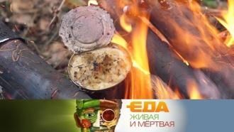 Вся правда оконсервах, польза льна и5главных кулинарных тенденций 2018года— всубботу в«Еде живой имёртвой» на НТВ.еда, продукты.НТВ.Ru: новости, видео, программы телеканала НТВ