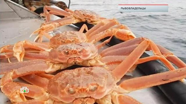 «Рыбовладельцы».«Рыбовладельцы».НТВ.Ru: новости, видео, программы телеканала НТВ