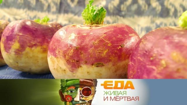 Все орепе ивыбор хурмы, которая не вяжет, — 12января в«Еде живой имёртвой» на НТВ.НТВ.Ru: новости, видео, программы телеканала НТВ