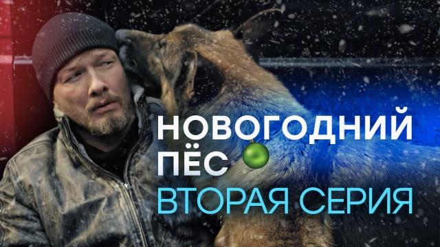 «Новогодний Пёс». 2-я серия.«Новогодний Пёс». 2-я серия.НТВ.Ru: новости, видео, программы телеканала НТВ