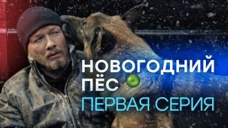 «Новогодний Пёс». 1-я серия.«Новогодний Пёс». 1-я серия.НТВ.Ru: новости, видео, программы телеканала НТВ