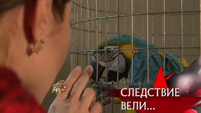«Золотая клетка».«Золотая клетка».НТВ.Ru: новости, видео, программы телеканала НТВ
