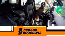 Дайджест от 27 января 2019 года.Законно ли эвакуировать машину с собакой внутри и как навести порядок в салоне?НТВ.Ru: новости, видео, программы телеканала НТВ