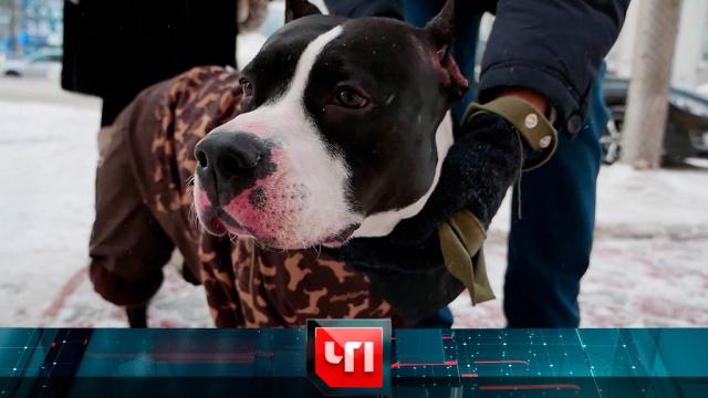 28 января 2019 года.28 января 2019 года.НТВ.Ru: новости, видео, программы телеканала НТВ