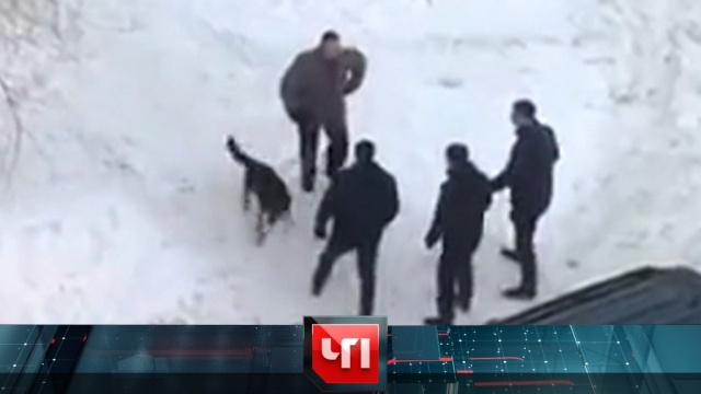 31 января 2019 года.31 января 2019 года.НТВ.Ru: новости, видео, программы телеканала НТВ