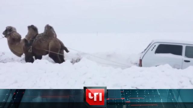 7 февраля 2019 года.7 февраля 2019 года.НТВ.Ru: новости, видео, программы телеканала НТВ