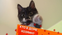 Выпуск сорок первый.Как подружить котенка и пса, слишком ласковые коты и все о каракалах.НТВ.Ru: новости, видео, программы телеканала НТВ