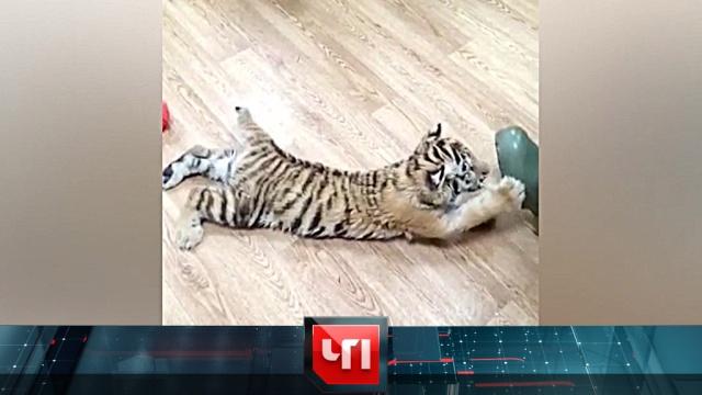 11 февраля 2019 года.11 февраля 2019 года.НТВ.Ru: новости, видео, программы телеканала НТВ