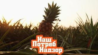 Почему зимой нужно налегать на ананасы ичто можно съесть на ночь без вреда для фигуры? «НашПотребНадзор»— ввоскресенье на НТВ.еда, здоровье, продукты.НТВ.Ru: новости, видео, программы телеканала НТВ