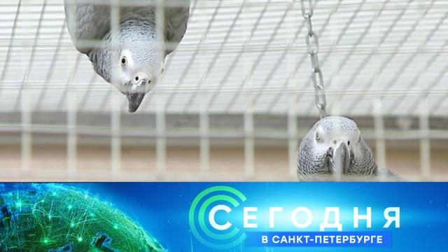 5марта 2019года. 19:20.5марта 2019года. 19:20.НТВ.Ru: новости, видео, программы телеканала НТВ