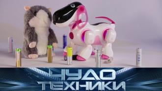 Можноли победить моль, как выбрать стойкие батарейки ичем хороши патчи для глаз? «Чудо техники»— ввоскресенье в11:00.НТВ.Ru: новости, видео, программы телеканала НТВ