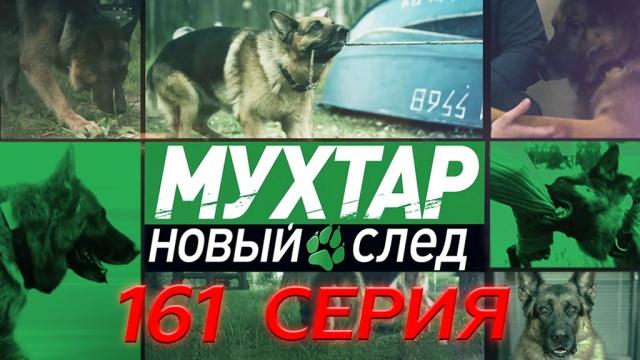 161-я серия.161-я серия.НТВ.Ru: новости, видео, программы телеканала НТВ