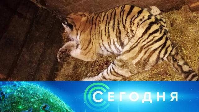 25марта 2019года. 13:00.25марта 2019года. 13:00.НТВ.Ru: новости, видео, программы телеканала НТВ