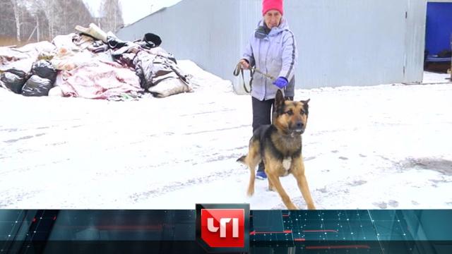 27 марта 2019 года.27 марта 2019 года.НТВ.Ru: новости, видео, программы телеканала НТВ