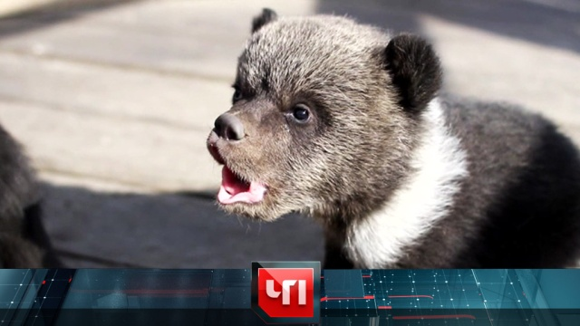 15 апреля 2019 года.15 апреля 2019 года.НТВ.Ru: новости, видео, программы телеканала НТВ