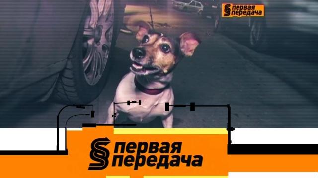 Выпуск от 21апреля 2019года.Большой конфликт из-за маленькой собаки и покупка б/у автомобиля у официального дилера.НТВ.Ru: новости, видео, программы телеканала НТВ