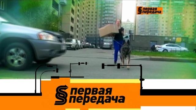Выпуск от 19 мая 2019 года.Спорное ДТП с собакой, одна машина на двоих имойка под капотом.НТВ.Ru: новости, видео, программы телеканала НТВ