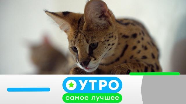 20 мая 2019 года.20 мая 2019 года.НТВ.Ru: новости, видео, программы телеканала НТВ