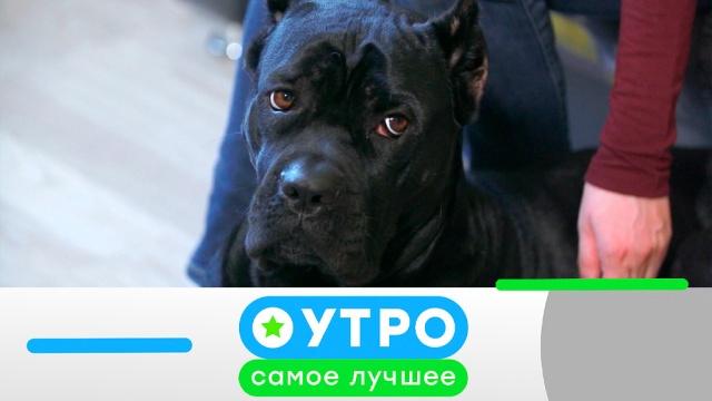21мая 2019года.21мая 2019года.НТВ.Ru: новости, видео, программы телеканала НТВ
