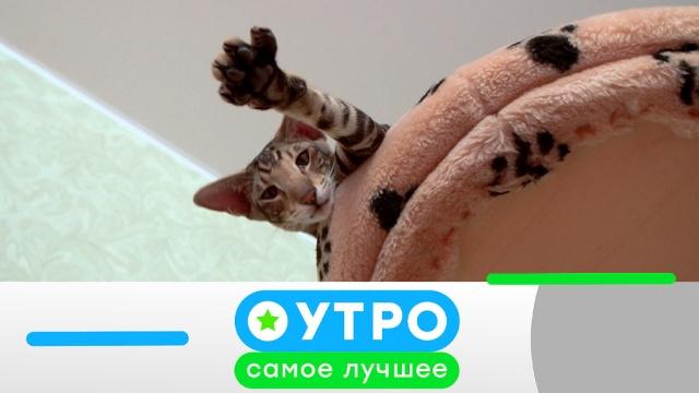 28 мая 2019 года.28 мая 2019 года.НТВ.Ru: новости, видео, программы телеканала НТВ