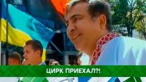 Цирк приехал?!Зеленский, Порошенко, США, Саакашвили, Украина, гражданство, дипломатия.НТВ.Ru: новости, видео, программы телеканала НТВ