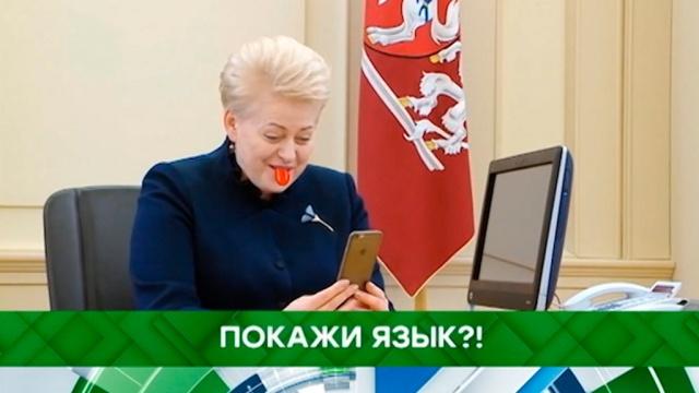 Выпуск от 31мая 2019года.Покажи язык?!НТВ.Ru: новости, видео, программы телеканала НТВ