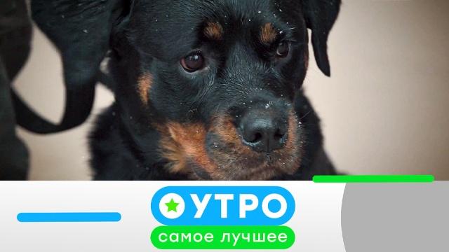 4 июня 2019 года.4 июня 2019 года.НТВ.Ru: новости, видео, программы телеканала НТВ