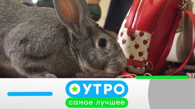 11 июня 2019года.11 июня 2019года.НТВ.Ru: новости, видео, программы телеканала НТВ
