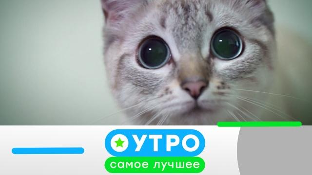 17 июня 2019 года.17 июня 2019 года.НТВ.Ru: новости, видео, программы телеканала НТВ